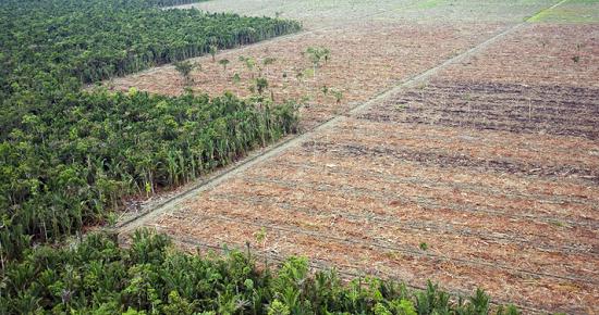 Deforestablinders