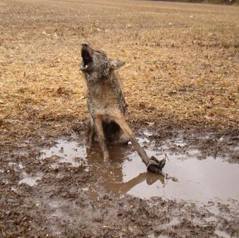 agonywolf